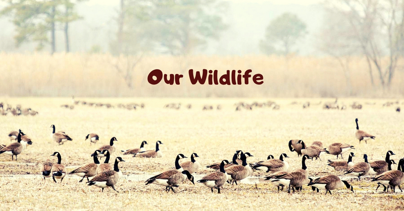 Our Wildlife